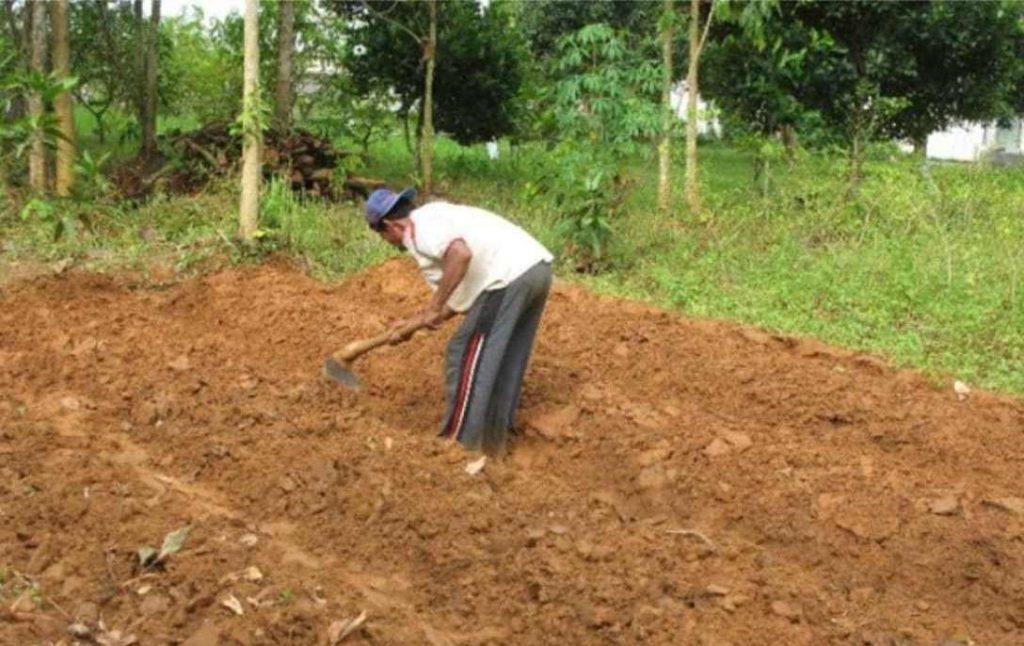 pembajakan lahan