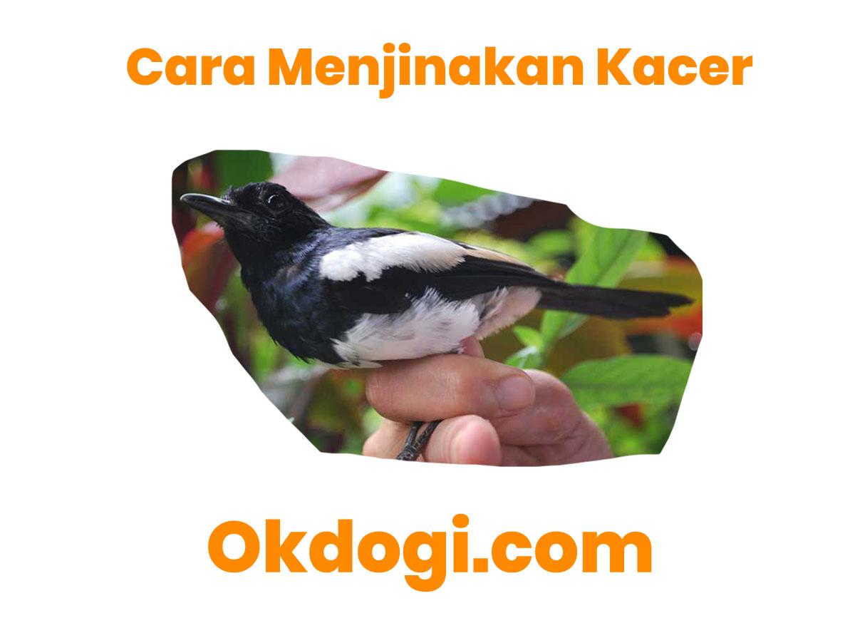 53 Gambar Binatang Burung Kacer Gratis Terbaik