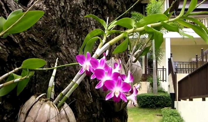bunga anggrek dengan media pohon