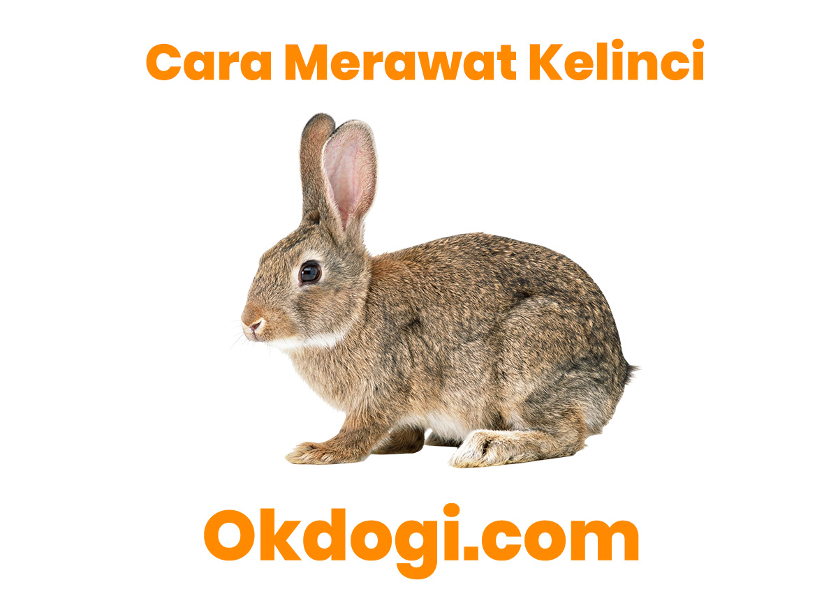 3 Kunci Wajib Cara Merawat Kelinci, WAJIB BACA!