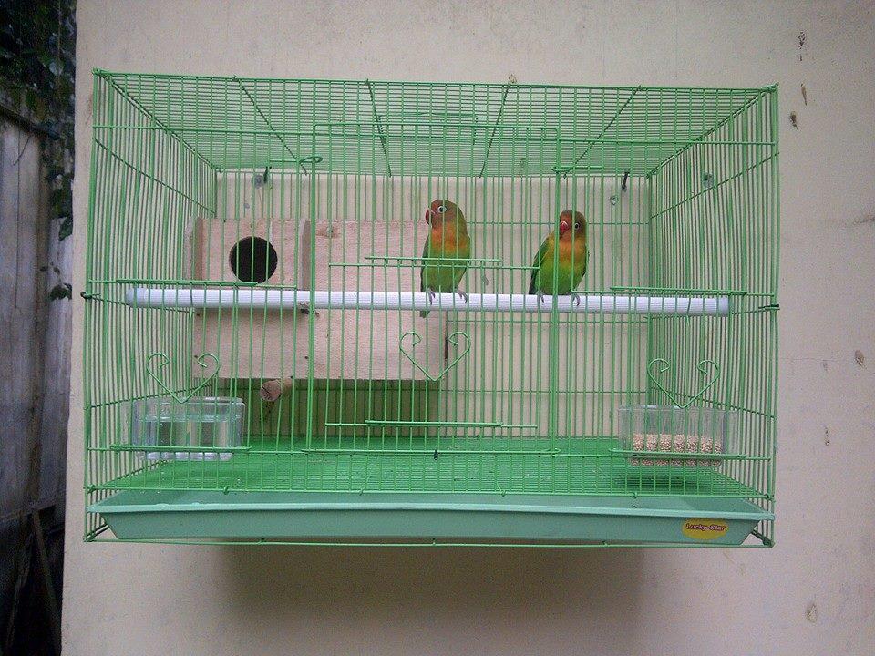 kandang lovebird