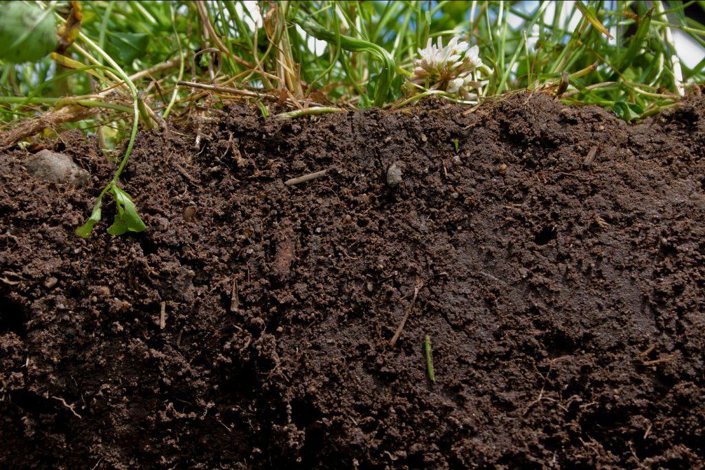 gemburkan lahan bawang