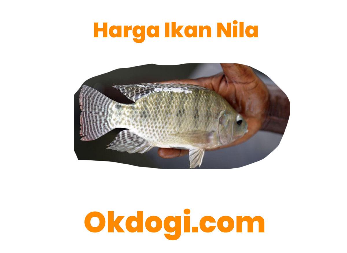 harga ikan nila
