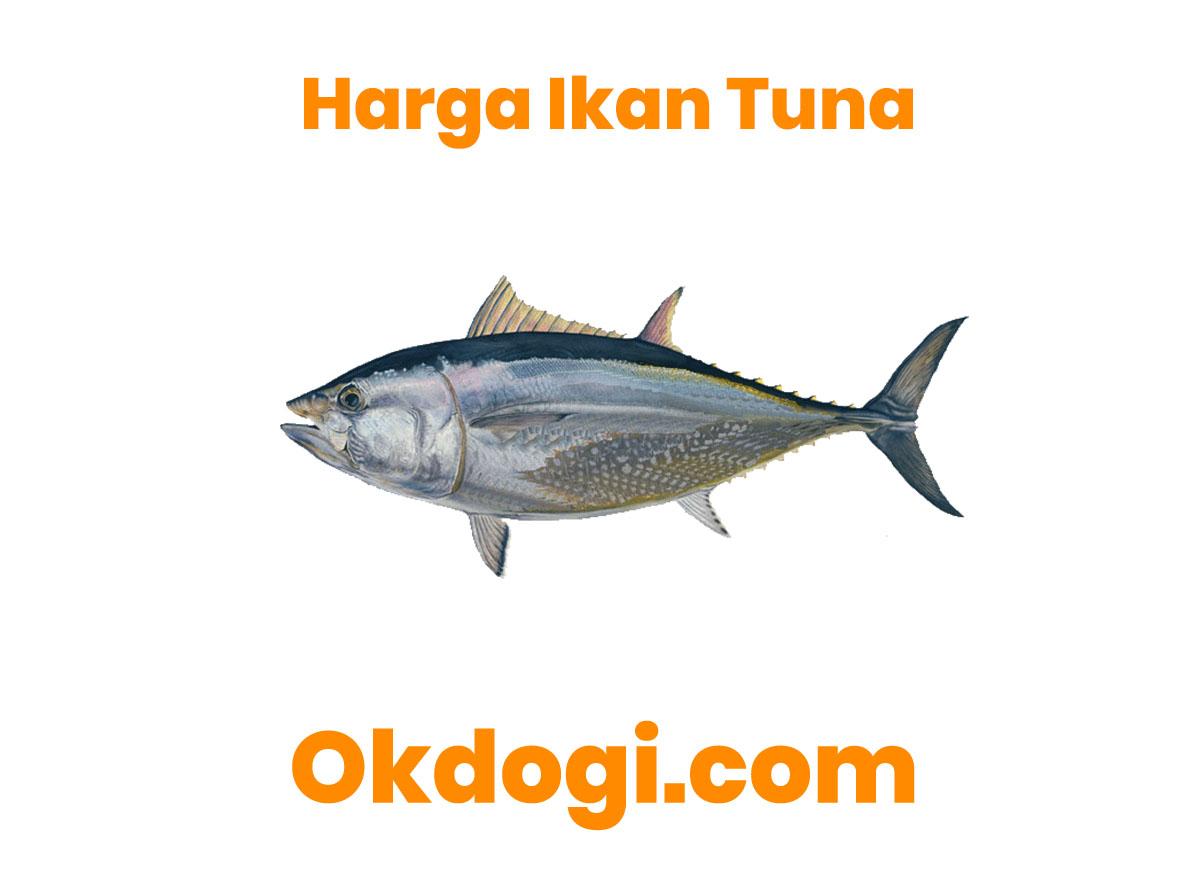 Harga Pasaran Ikan Tuna Terbaru 2019, SURVEY LANGSUNG!