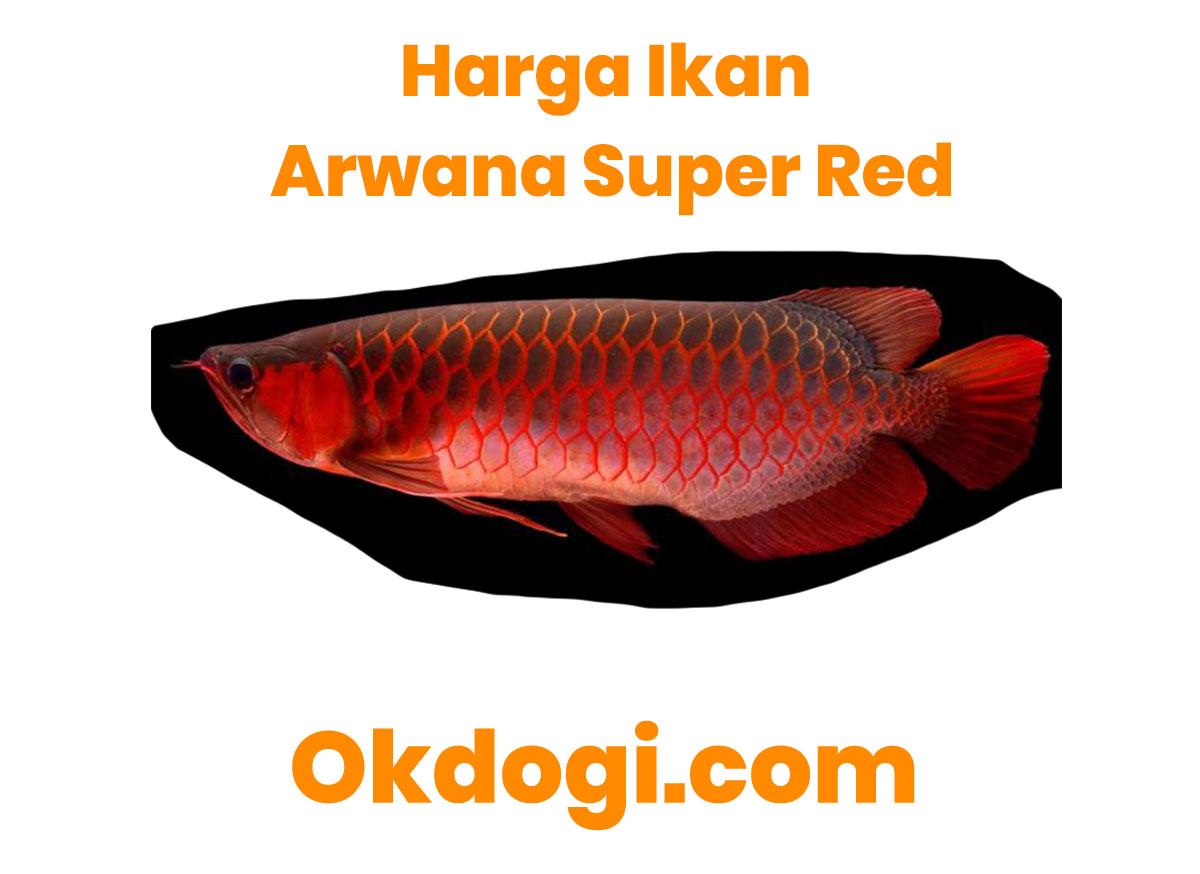 harga ikan arwana super red