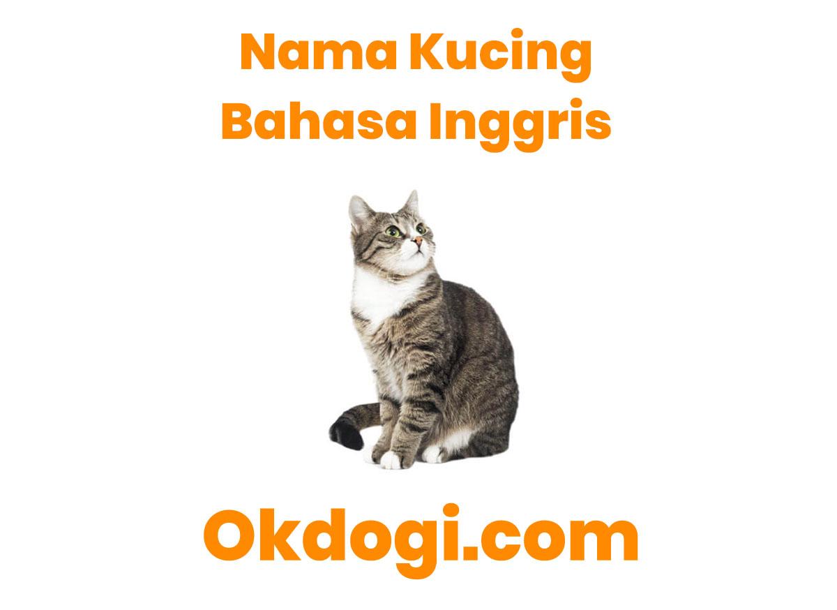 Nama Anak Kucing Yang Bagus Dalam Bahasa Inggris