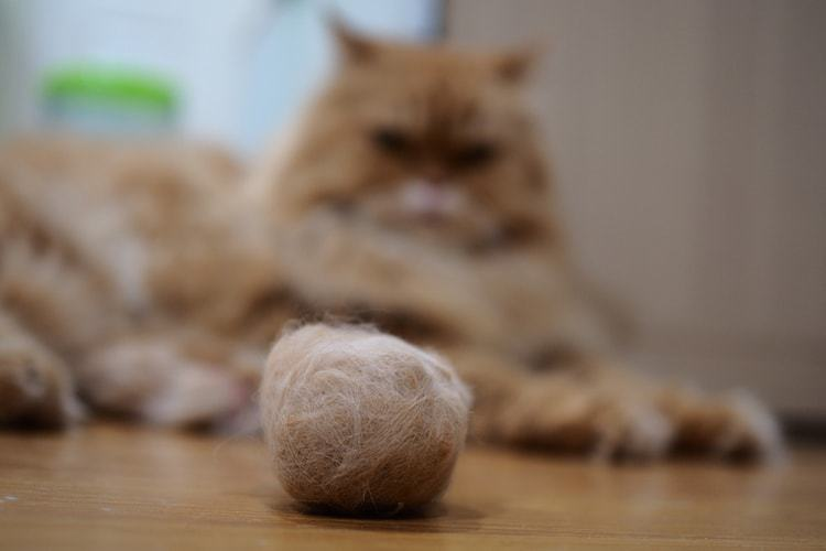 kucing muntah bulu