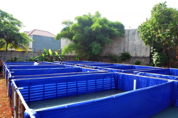 kolam terpal ikan patin
