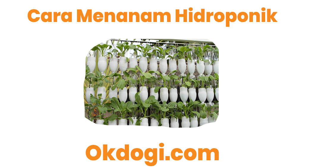 cara menanam hidroponik