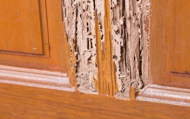 kayu yang terkena rayap