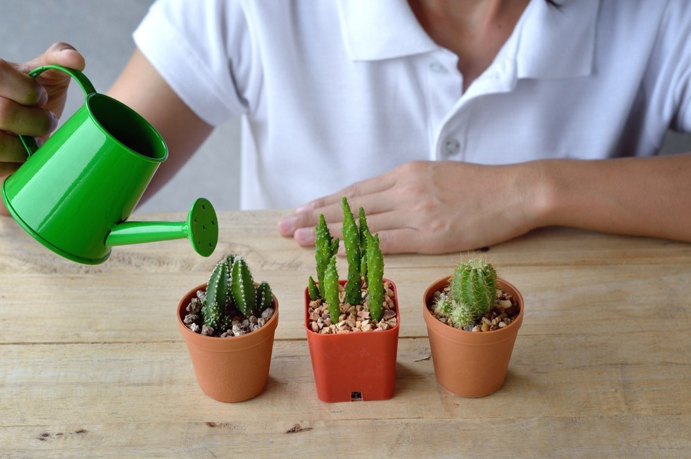 penyiraman kaktus