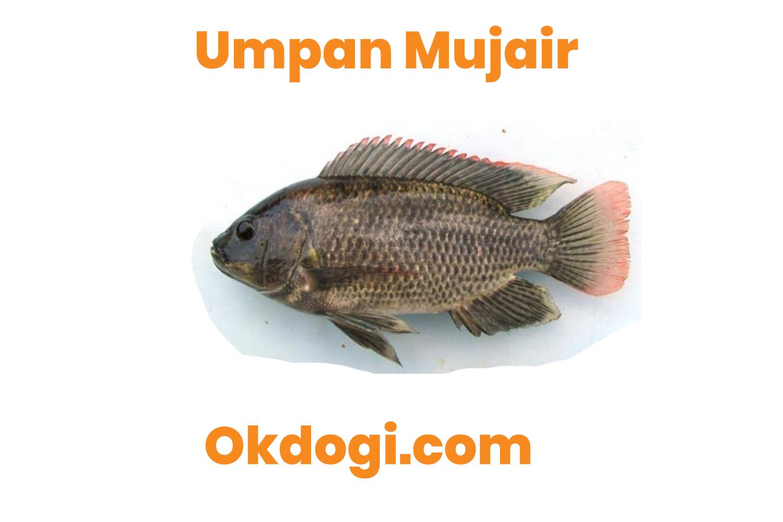 Jenis Umpan Pancing Ikan Mujair Paling Top Joss!