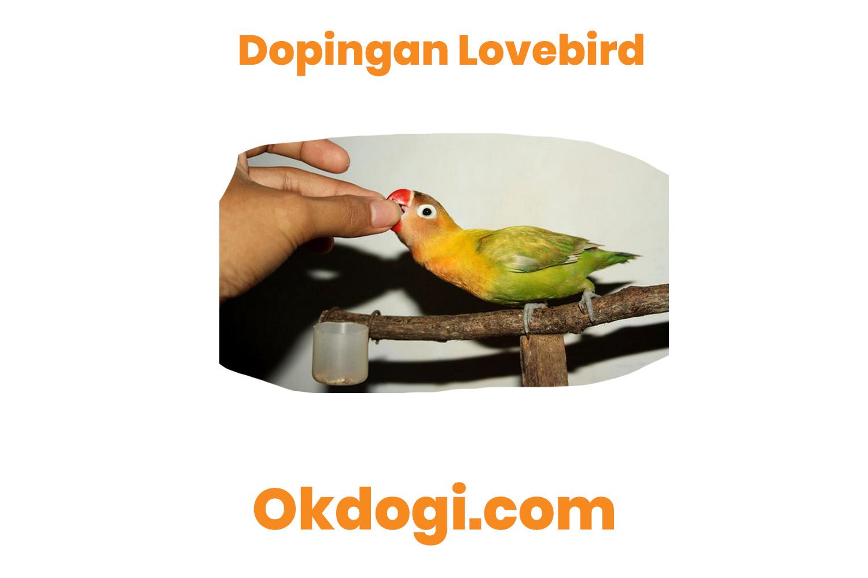 jenis doping lovebird