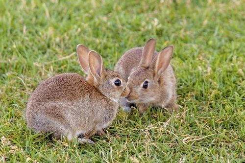 Apa Manfaat Kelinci untuk Manusia dan Lingkungan? - Okdogi ...