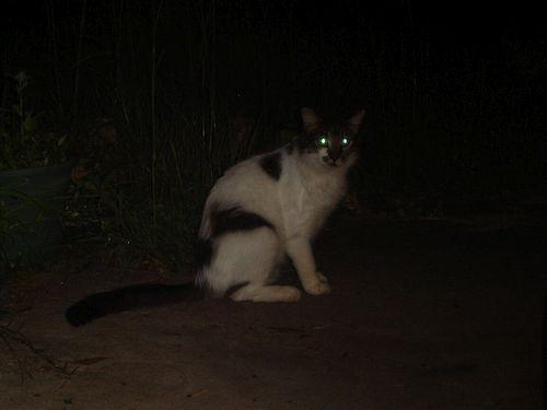Kucing Gelap