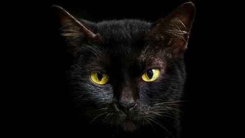 Kucing dalam Gelap