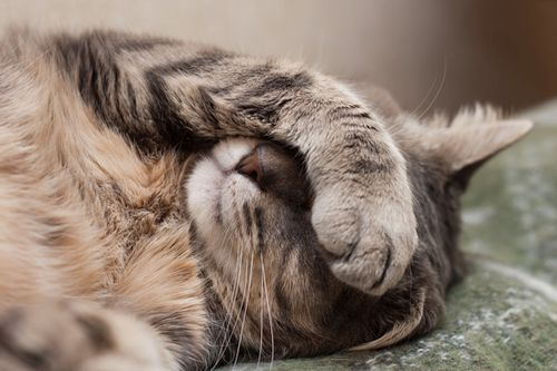 Kucing stroke