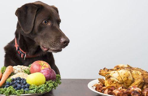 Bawang Putih Untuk Anjing Obat Atau Racun