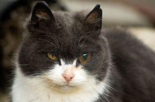 Mata kucing kuning