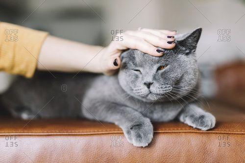 menyentuh, membelai, mengelus kucing yang benar