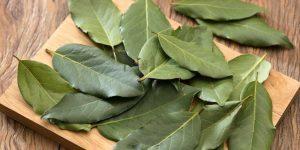 bau yang tidak disukai tikus daun salam